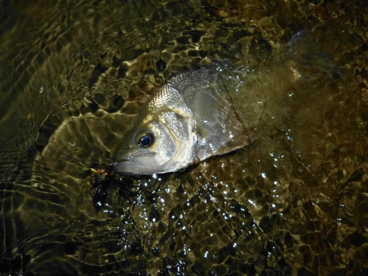 Search for Perch – Tackle Tactics